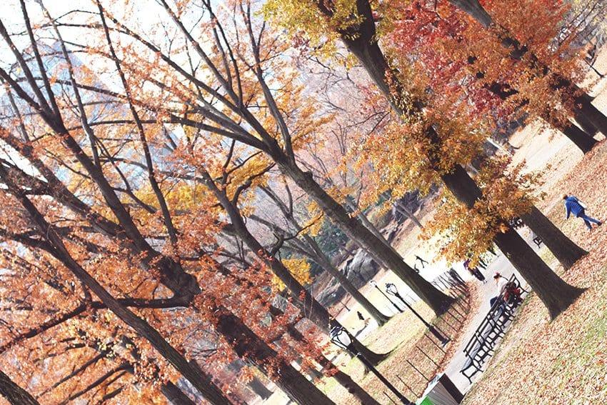 REJSER <i>- efterår i Central Park</i>