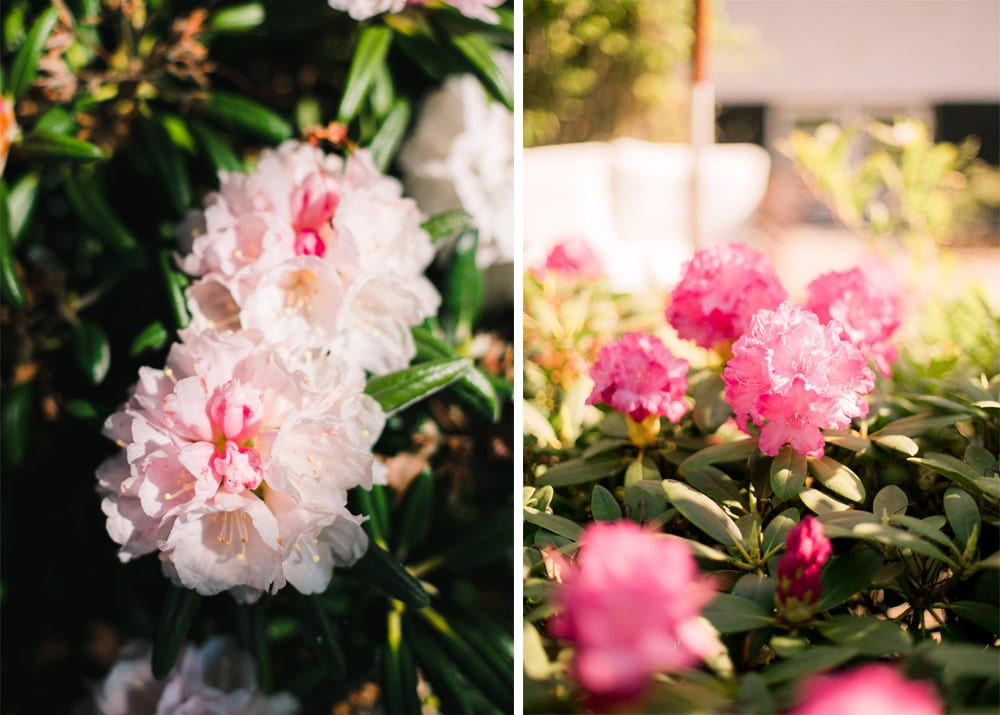 have-acie-blog-blomster-15-of-20
