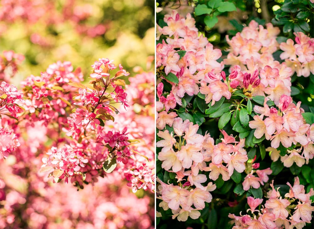 have-acie-blog-blomster-5-of-20