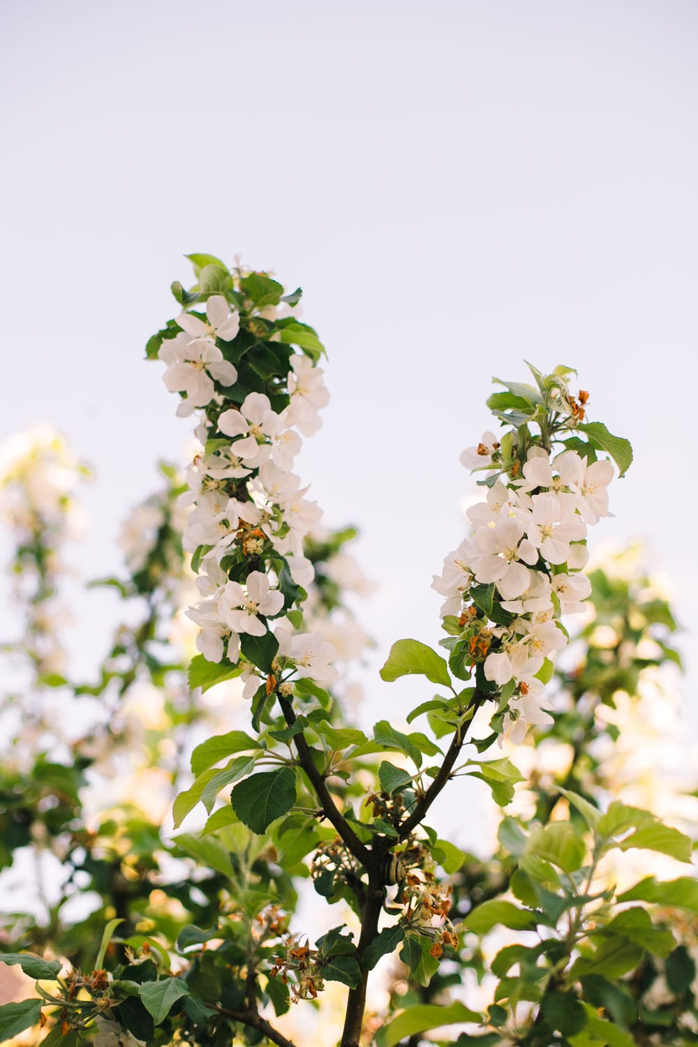 have-acie-blog-blomster-9-of-20